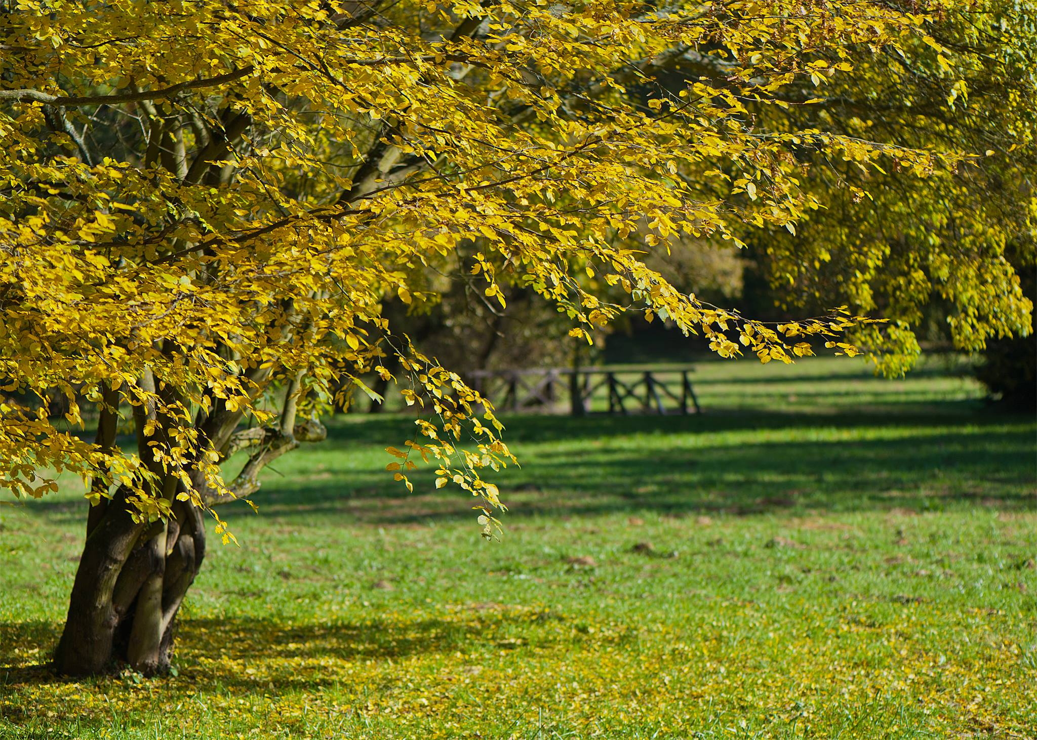 Průhonický park,Park Pruhonice,Prague, Czech Republic